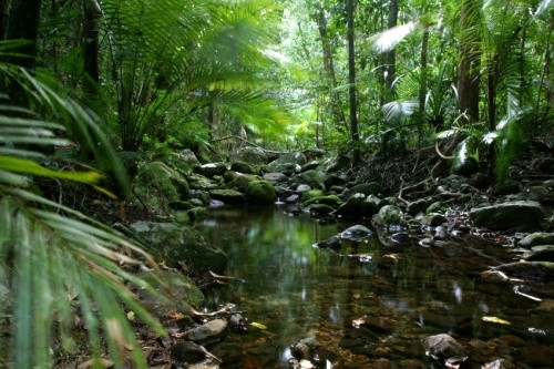 Australia - Daintree Rainforest
