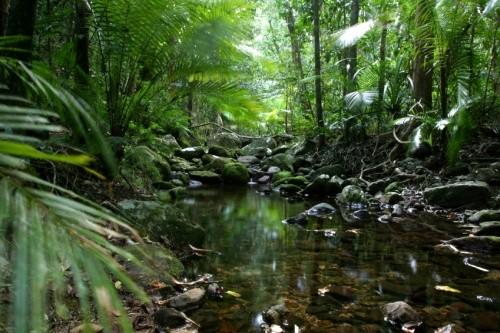 Daintree Australia  city photo : Australia Daintree Rainforest
