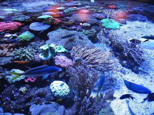 Images Australia Ningaloo Reef 326