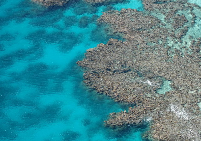 Great Barrier Reef - Coral view