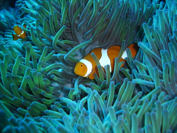 Great Barrier Reef - Diversity of life