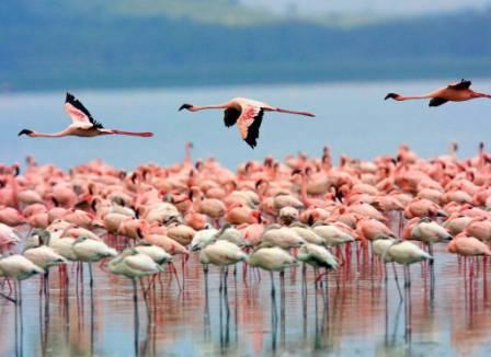 Lake Nakuru in Kenya - Flamingos