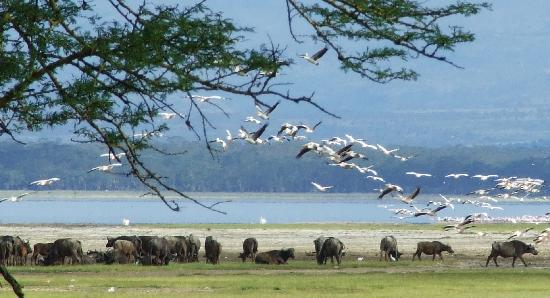 Lake Nakuru in Kenya - Wildlife at Lake Nakuru