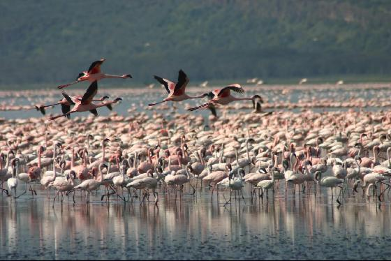 Lake Nakuru in Kenya - Wildlife