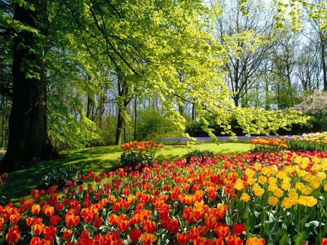 holland sponsored links sponsored links image keukenhof gardens view - Garden View