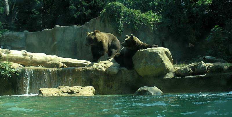 Rome Zoological Garden, Italy - Bears at the Rome Zoo
