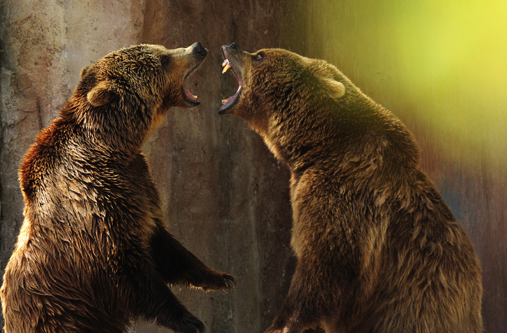 Madrid Zoo & Aquarium - Grizzly bears