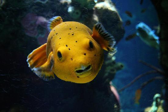 Lisbon Oceanarium Museum Of Marine Biology Travelvivi Com