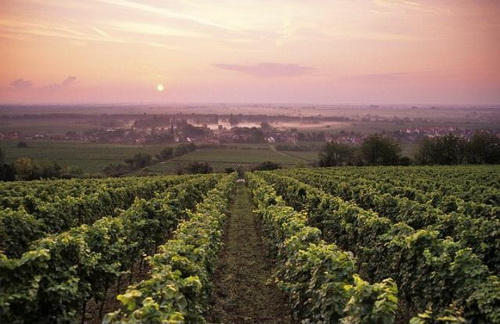 France - Famous French vineyards