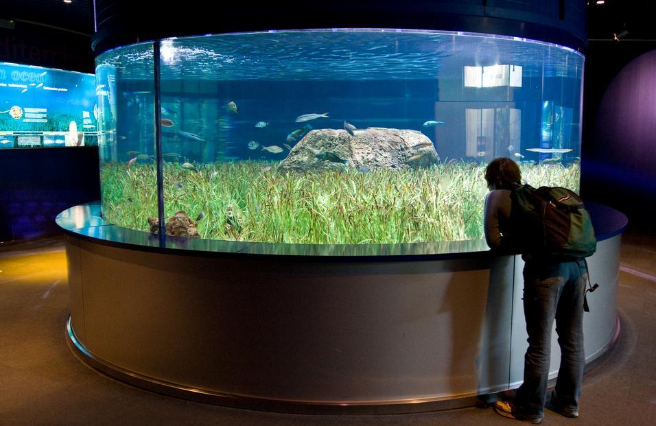 The Aquarium in Valencia, Spain - The most beautiful ...