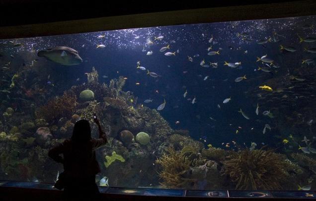 The Aquarium in Valencia, Spain - The most beautiful aquariums in the ...