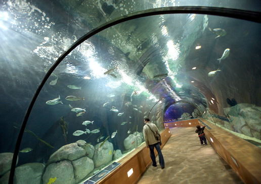 The aquarium in valencia spain the most beautiful for Acuario valencia precio