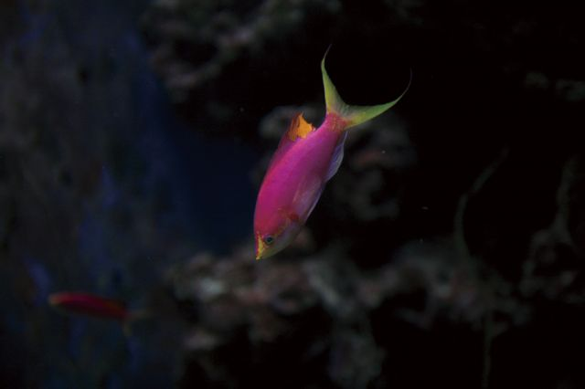 The Okinawa Churaumi Aquarium, Japan - Fish in the Churaumi Aquarium