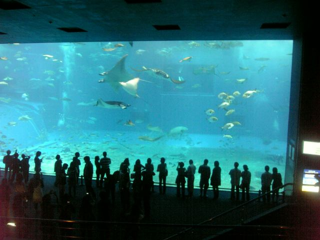 The Okinawa Churaumi Aquarium, Japan - Rich marine life