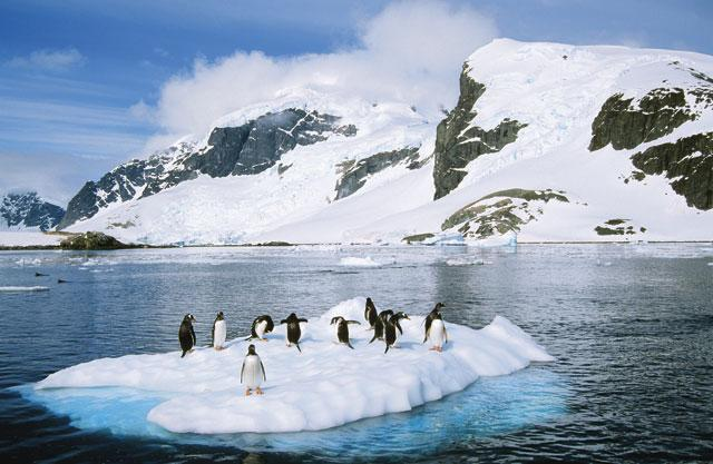 Penguins Pictures in Antarctica Antarctica King Penguins