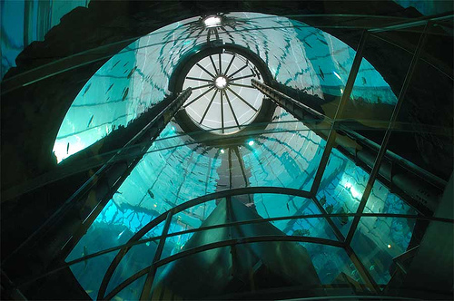 The AquaDom in Berlin, Germany - Inside view
