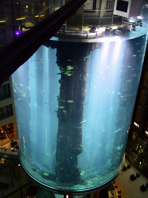 The AquaDom in Berlin, Germany - The world