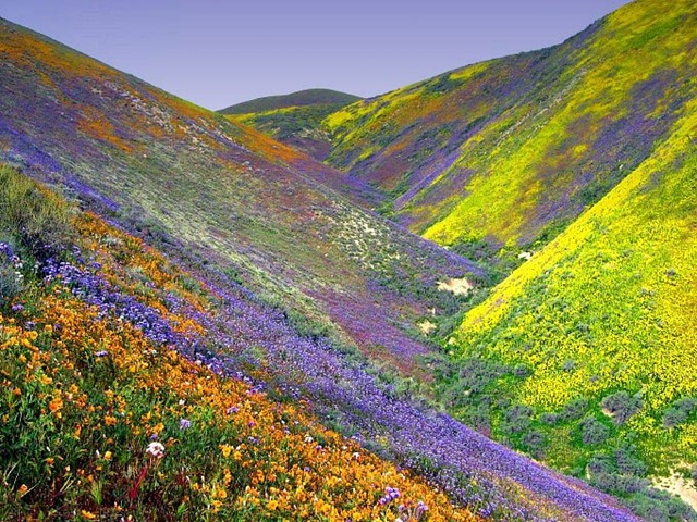 Valley of Flowers in the Himalayas, India - Amazing scents and colours