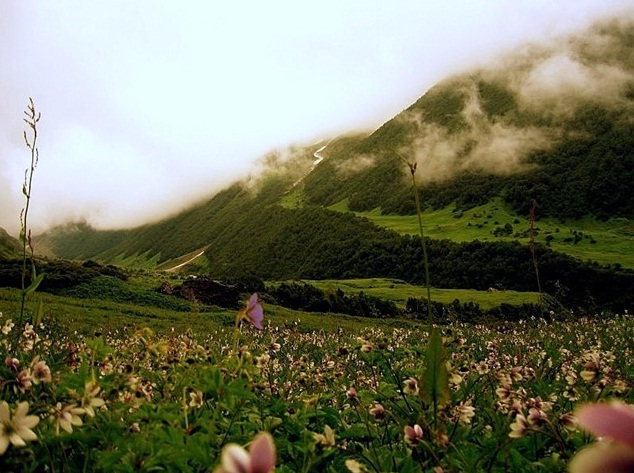 Valley of Flowers in the Himalayas, India - Beauty realm