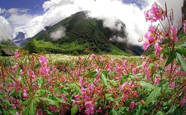 Valley of Flowers in the Himalayas, India - Picturesque setting
