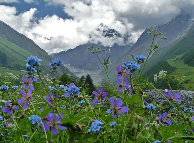 Valley of Flowers in the Himalayas, India - Scenic landscape