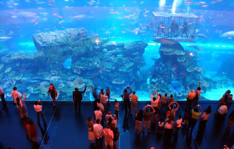 Dubai Aquarium & Discovery Centre, United Arab Emirates - Dubai Mall Aquarium
