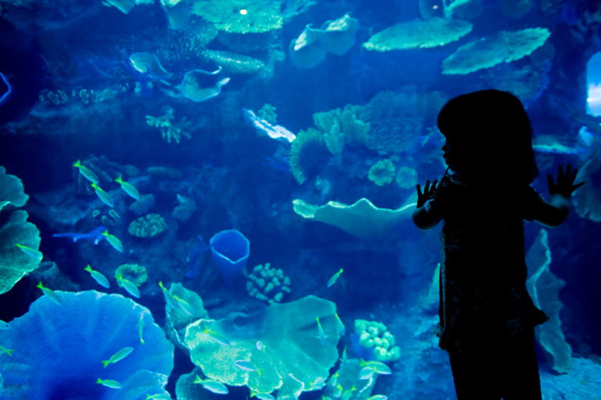 Dubai Aquarium & Discovery Centre, United Arab Emirates - Rich marine life