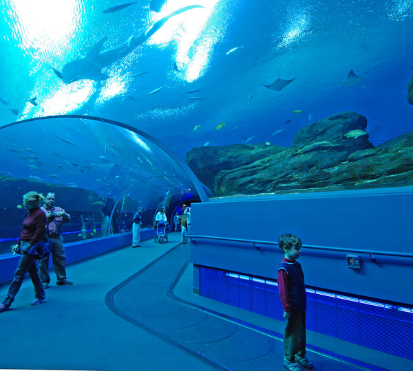 The Georgia Aquarium Usa The Most Beautiful Aquariums