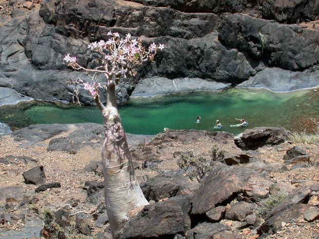 Socotra Island in Yemen - Beautiful landscape