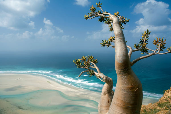 Socotra Island in Yemen - Great scenery