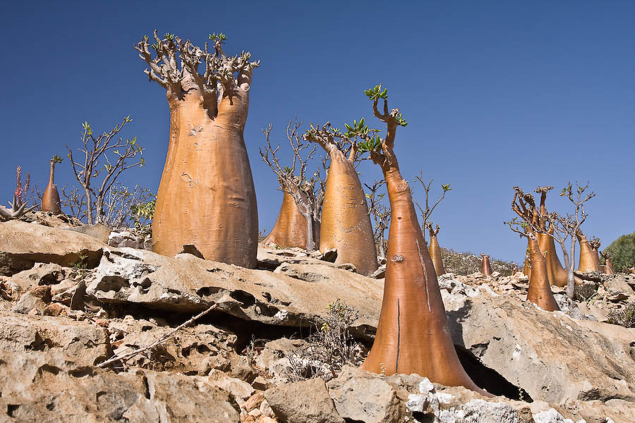 Socotra Island in Yemen - Great setting