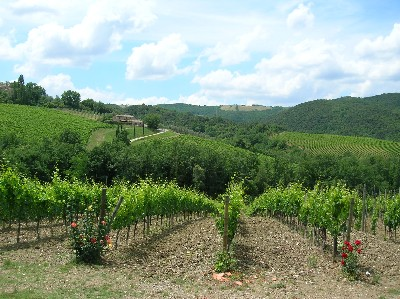 Montalcino Wine Tour - Montalcino vineyards