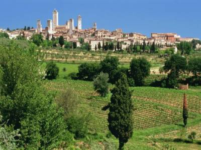 San Gimignano Wine Tour - San Gimignano vineyards