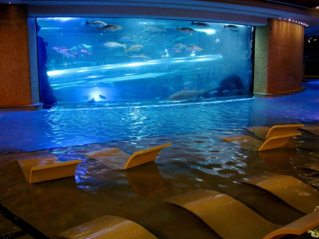 Golden nugget the best swimming pools in the world for Fish hotel tank
