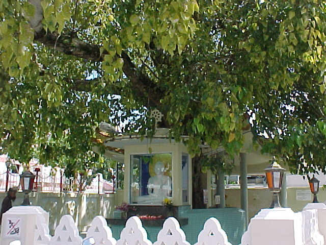 http://www.bestourism.com/img/items/big/608/Bodhi-Tree-in-Bodhgaya-India_General-view_2356.jpg