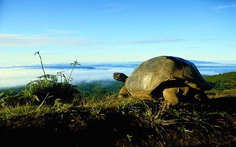 Galapagos Islands - Great scenery and wildlife
