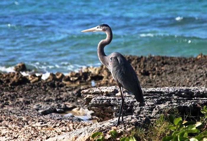 Cayo Coco and Cayo Guillermo - Exceptional fauna