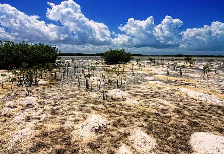 Cayo Coco and Cayo Guillermo - Great flora