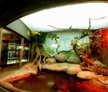 The Sevastopol Marine Aquarium Museum The Most Amazing