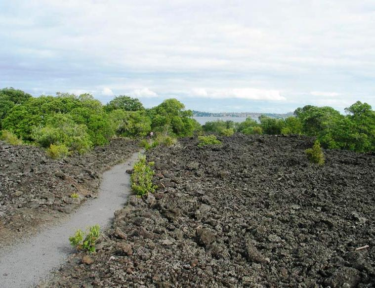 Rangitoto Island - Lava field with path and encroaching vegetation