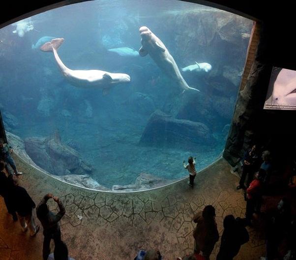 Georgia Aquarium Top Tourist Attractions In Georgia Usa