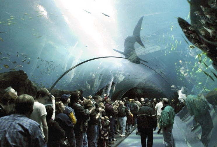 Georgia Aquarium - Interior view