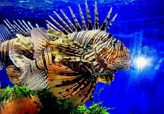 Rare fish species images galleries for Fish representative species