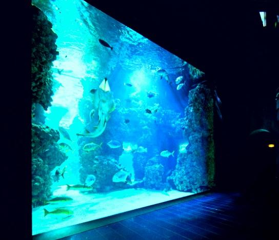 Oceanographic Museum and Aquarium : The Oceanographic Museum - The Museums Aquarium