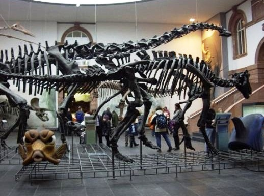 Senckenberg Museum of Natural History - Dinosaur skeleton