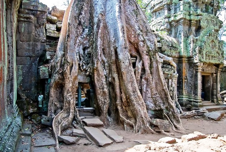 Angkor Wat in Cambodia - Ta Prohm Temple