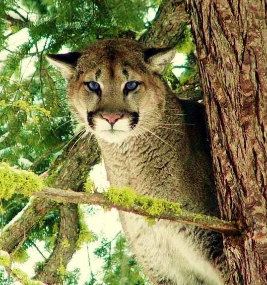 Zion National Park Fauna