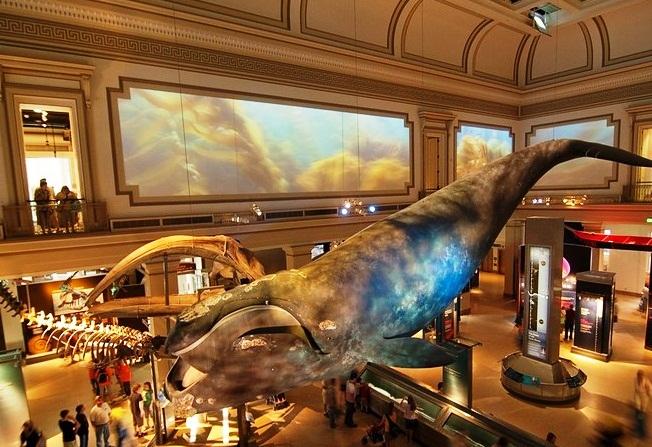 Exhibits At Natural History Museum Dc