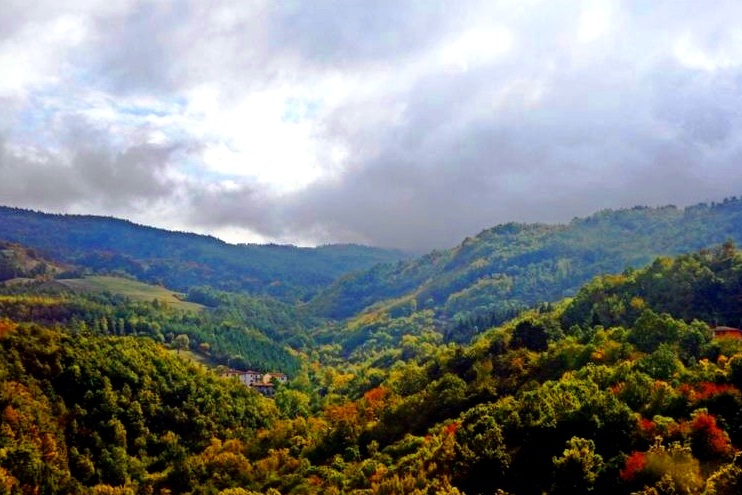 Foreste Casentinesi, Mount Falterona and Campigna National Park - Apennines