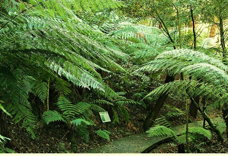 Black Mountain Nature Park  -  National Botanic Gardens – Rainforest